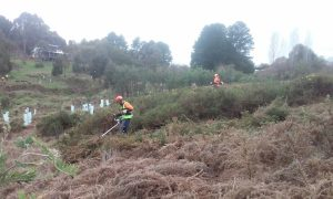 removal of gorse at point 11 A-web