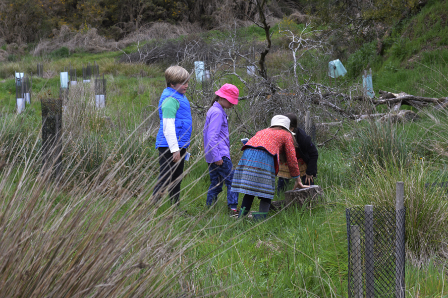 Children searching for hiding frogs on Cornish Hill