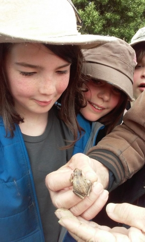 Children looking at a tiny frog in someone's hand